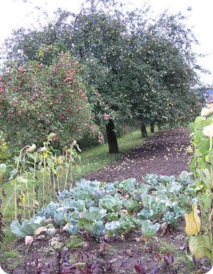 משהו אופייני - עצי תפוחים בצידי בדרך
