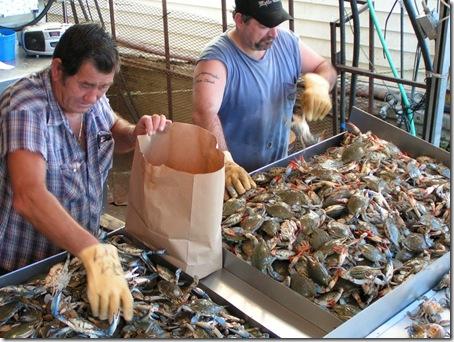 Fish Market6