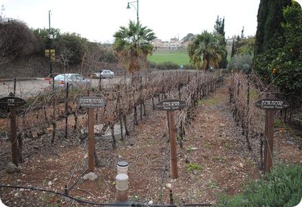 Tabor Winery (7)