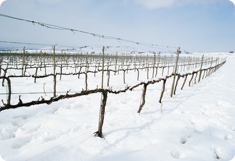 Snowy Golan Heights 094