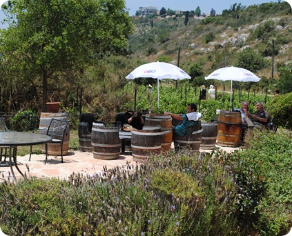 Amphorae Vineyards 039