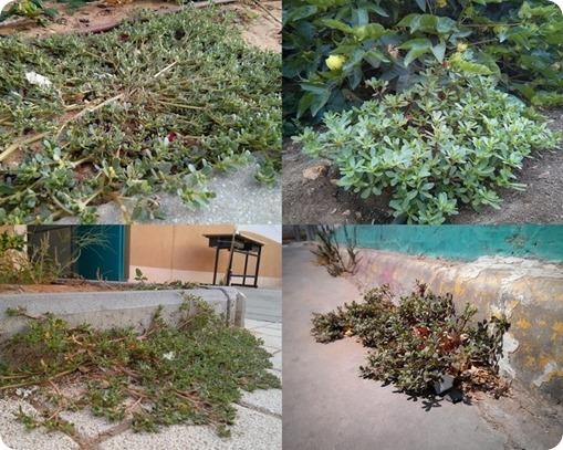 גינה אקולוגית ורגלת הגינה