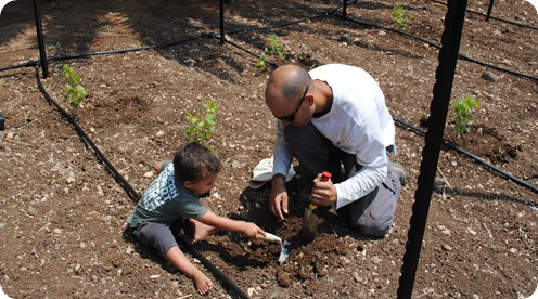cs planting 095