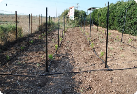 cs planting 109