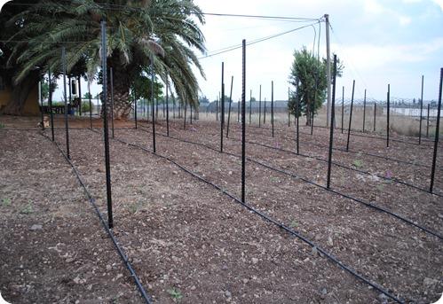cs planting 008