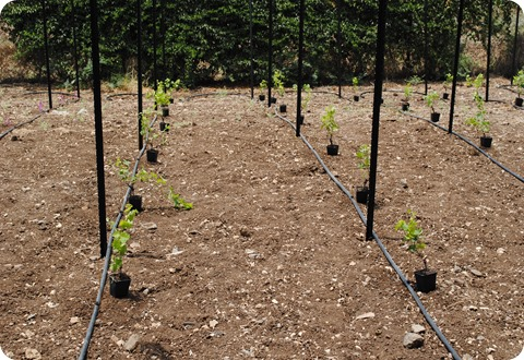 cs planting 029