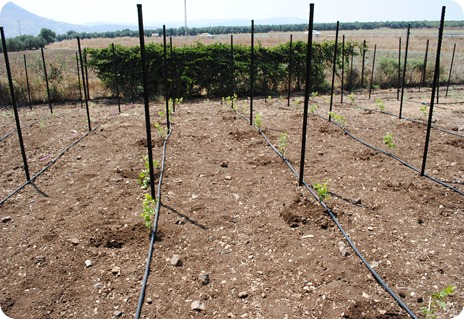 cs planting 102